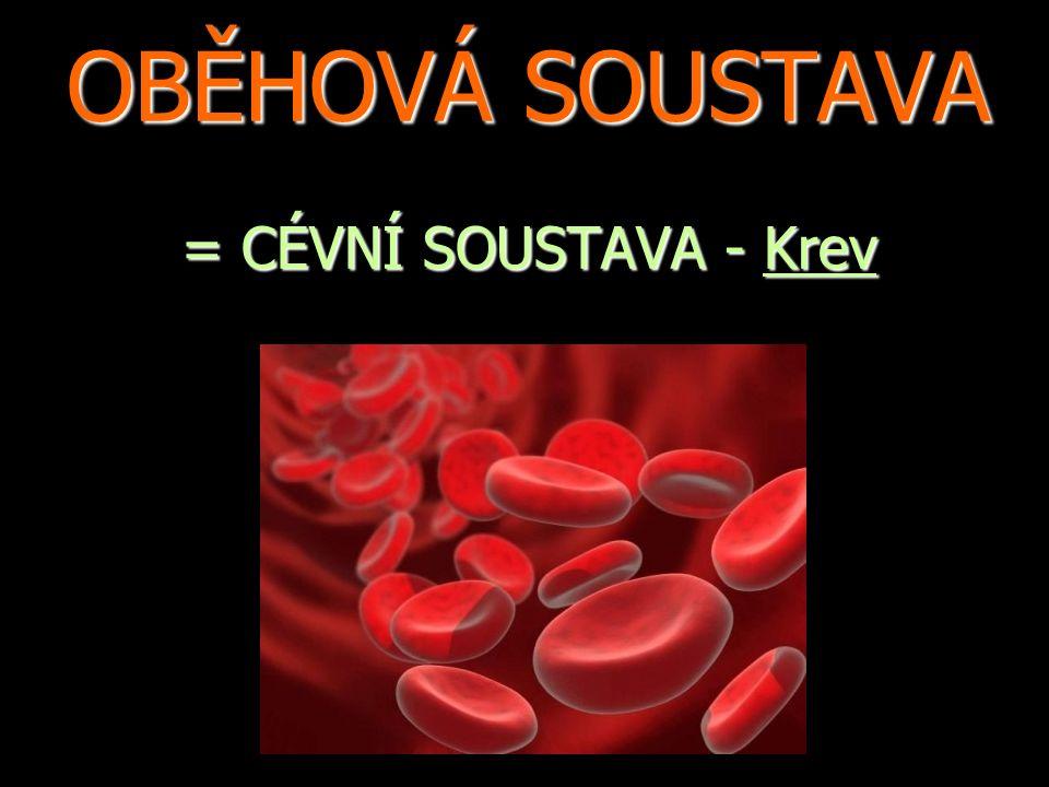 OBĚHOVÁ SOUSTAVA = CÉVNÍ SOUSTAVA - Krev
