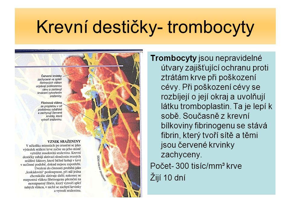 Krvetvorba V dospělosti probíhá tvorba červených a bílých krvinek a krevních destiček v: lebka krč.obratle klíční kosti žebra hrud.kost pánev kříž.kost +část bílých krvinek slezina a mízní uzliny