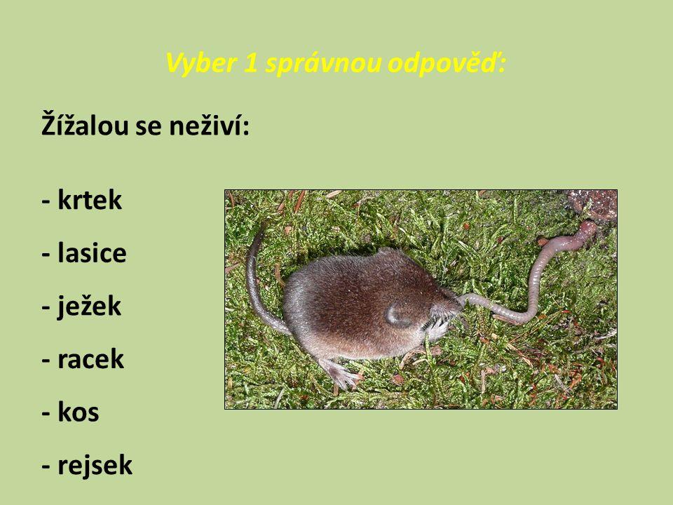 Vyber 1 správnou odpověď: Žížalou se neživí: - krtek - lasice - ježek - racek - kos - rejsek