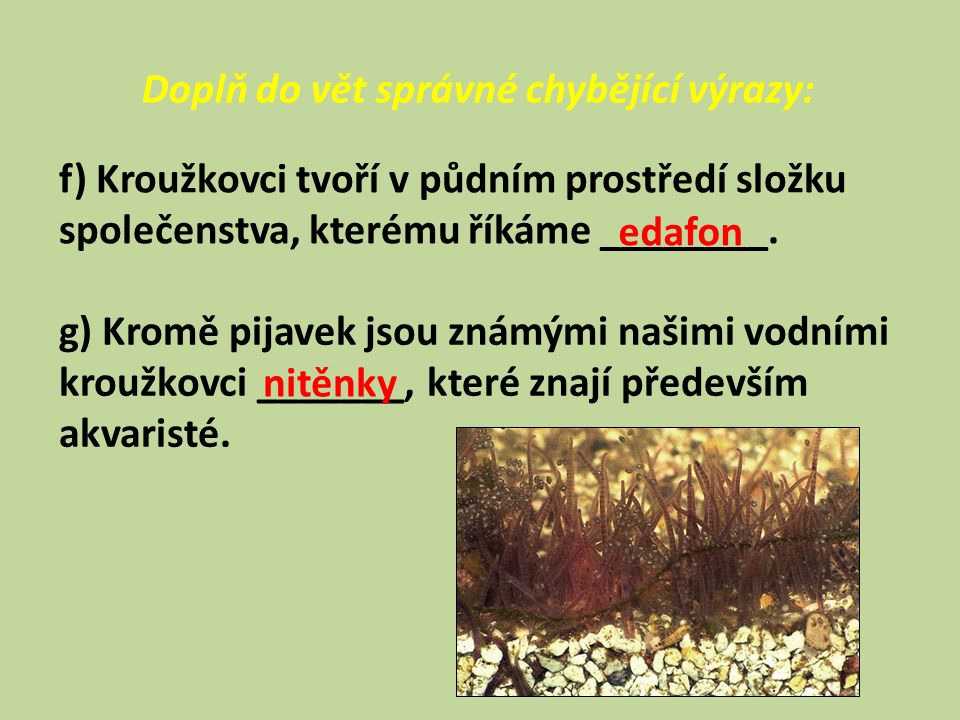 Doplň do vět správné chybějící výrazy: f) Kroužkovci tvoří v půdním prostředí složku společenstva, kterému říkáme ________.