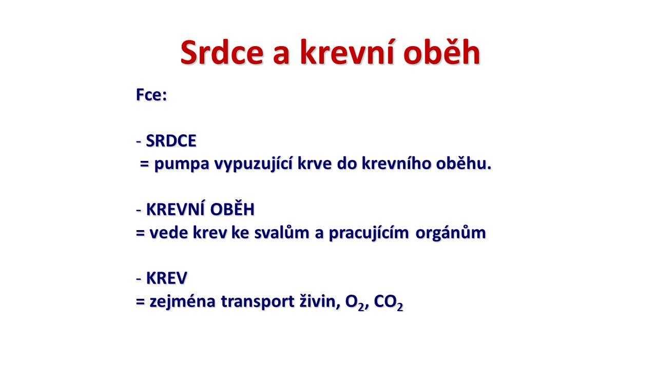 Srdce a krevní oběh Fce: - SRDCE = pumpa vypuzující krve do krevního oběhu. = pumpa vypuzující krve do krevního oběhu. - KREVNÍ OBĚH = vede krev ke sv