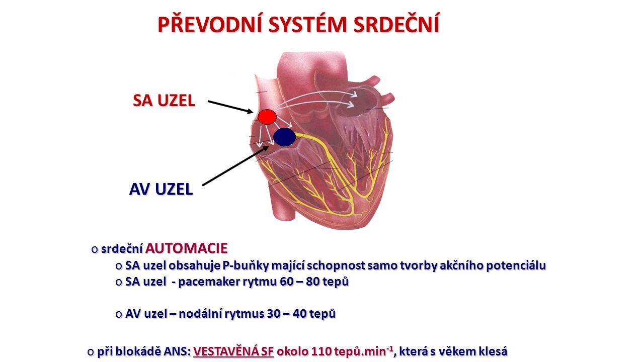 PŘEVODNÍ SYSTÉM SRDEČNÍ o srdeční AUTOMACIE o SA uzel obsahuje P-buňky mající schopnost samo tvorby akčního potenciálu o SA uzel - pacemaker rytmu 60