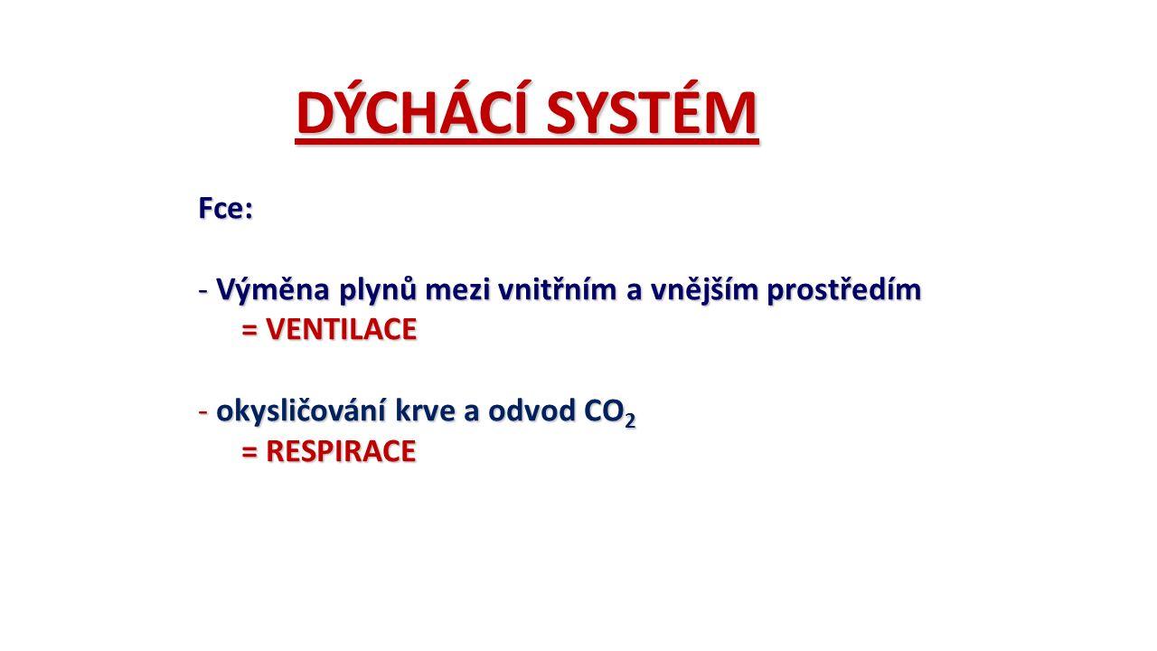 DÝCHÁCÍ SYSTÉM Fce: - Výměna plynů mezi vnitřním a vnějším prostředím = VENTILACE - okysličování krve a odvod CO 2 = RESPIRACE