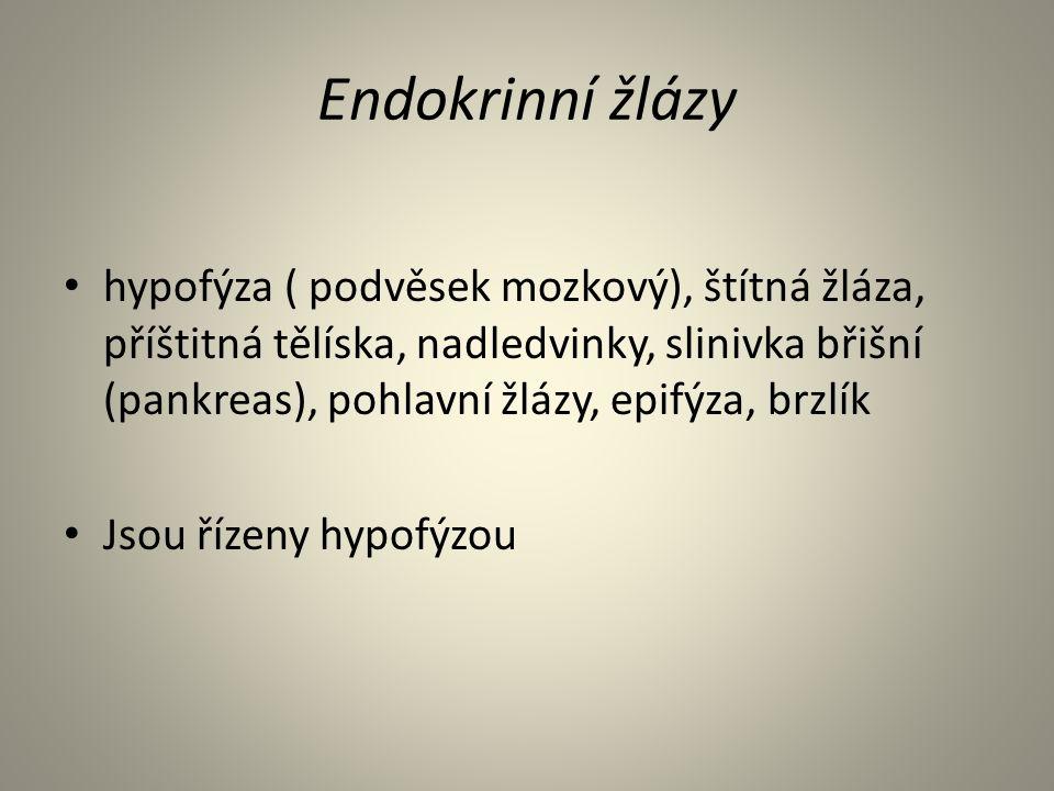 Endokrinní žlázy hypofýza ( podvěsek mozkový), štítná žláza, příštitná tělíska, nadledvinky, slinivka břišní (pankreas), pohlavní žlázy, epifýza, brzlík Jsou řízeny hypofýzou