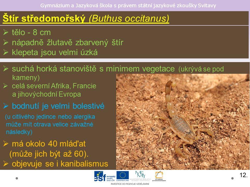 Gymnázium a Jazyková škola s právem státní jazykové zkoušky Svitavy Štír středomořský (Buthus occitanus)  tělo - 8 cm  nápadně žlutavě zbarvený štír
