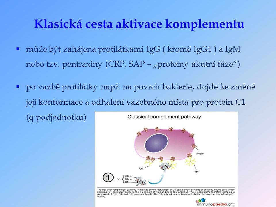 Klasická cesta aktivace komplementu  může být zahájena protilátkami IgG ( kromě IgG4 ) a IgM nebo tzv.