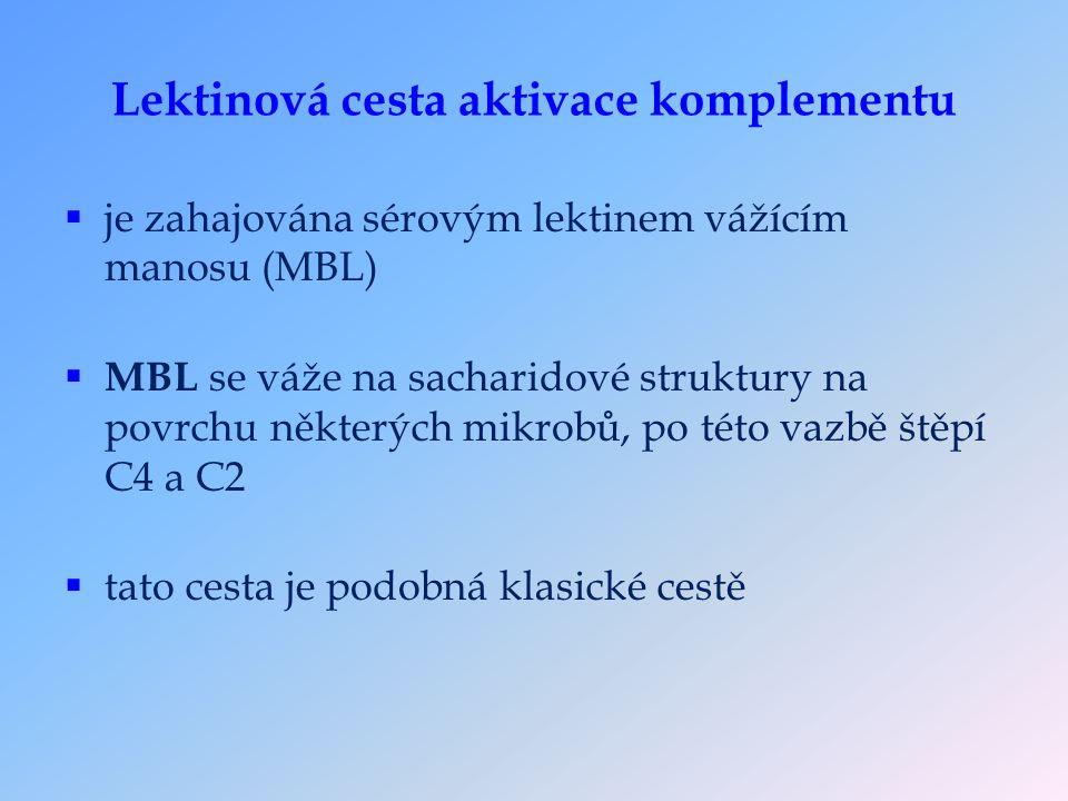 Lektinová cesta aktivace komplementu  je zahajována sérovým lektinem vážícím manosu (MBL)  MBL se váže na sacharidové struktury na povrchu některých mikrobů, po této vazbě štěpí C4 a C2  tato cesta je podobná klasické cestě
