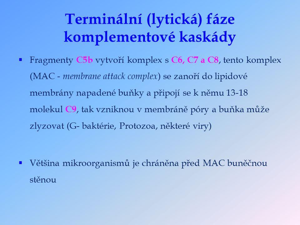 Terminální (lytická) fáze komplementové kaskády  Fragmenty C5b vytvoří komplex s C6, C7 a C8, tento komplex (MAC - membrane attack complex ) se zanoří do lipidové membrány napadené buňky a připojí se k němu 13-18 molekul C9, tak vzniknou v membráně póry a buňka může zlyzovat (G- baktérie, Protozoa, některé viry)  Většina mikroorganismů je chráněna před MAC buněčnou stěnou