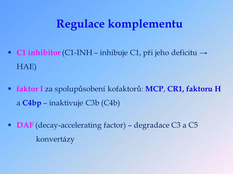 Regulace komplementu  C1 inhibitor (C1-INH – inhibuje C1, při jeho deficitu → HAE)  faktor I za spolupůsobení kofaktorů: MCP, CR1, faktoru H a C4bp – inaktivuje C3b (C4b)  DAF (decay-accelerating factor) – degradace C3 a C5 konvertázy