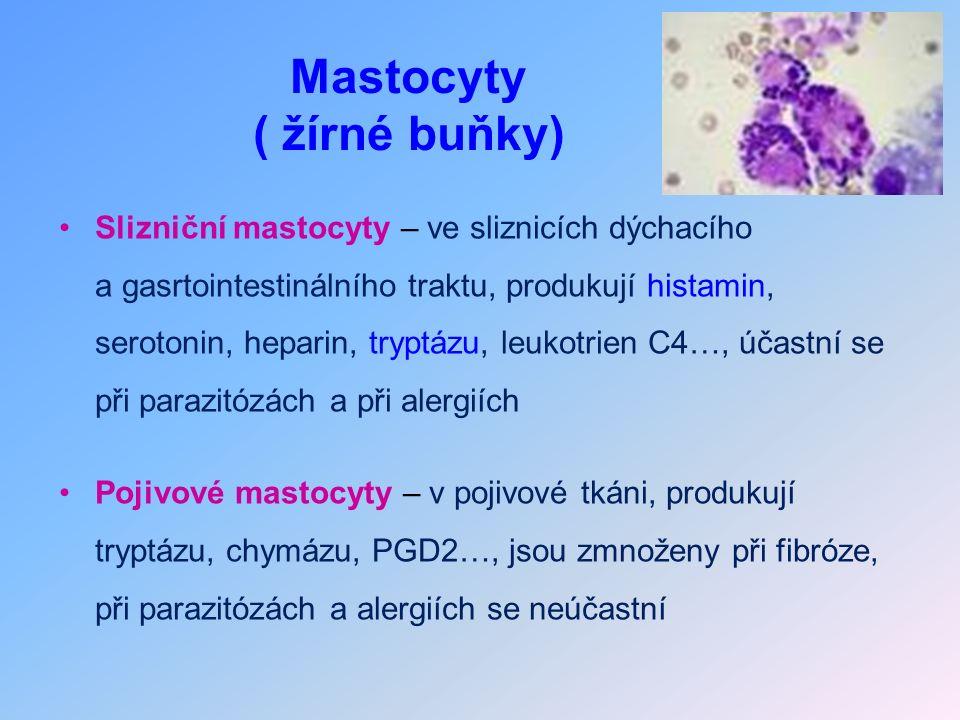 Mastocyty ( žírné buňky) Slizniční mastocyty – ve sliznicích dýchacího a gasrtointestinálního traktu, produkují histamin, serotonin, heparin, tryptázu, leukotrien C4…, účastní se při parazitózách a při alergiích Pojivové mastocyty – v pojivové tkáni, produkují tryptázu, chymázu, PGD2…, jsou zmnoženy při fibróze, při parazitózách a alergiích se neúčastní