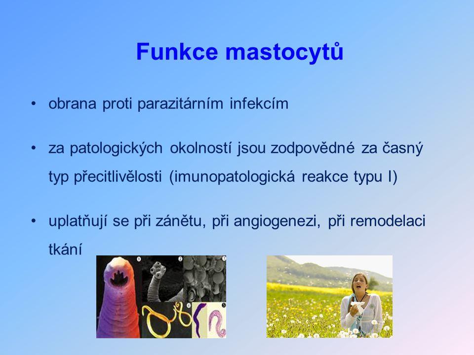 Funkce mastocytů obrana proti parazitárním infekcím za patologických okolností jsou zodpovědné za časný typ přecitlivělosti (imunopatologická reakce typu I) uplatňují se při zánětu, při angiogenezi, při remodelaci tkání