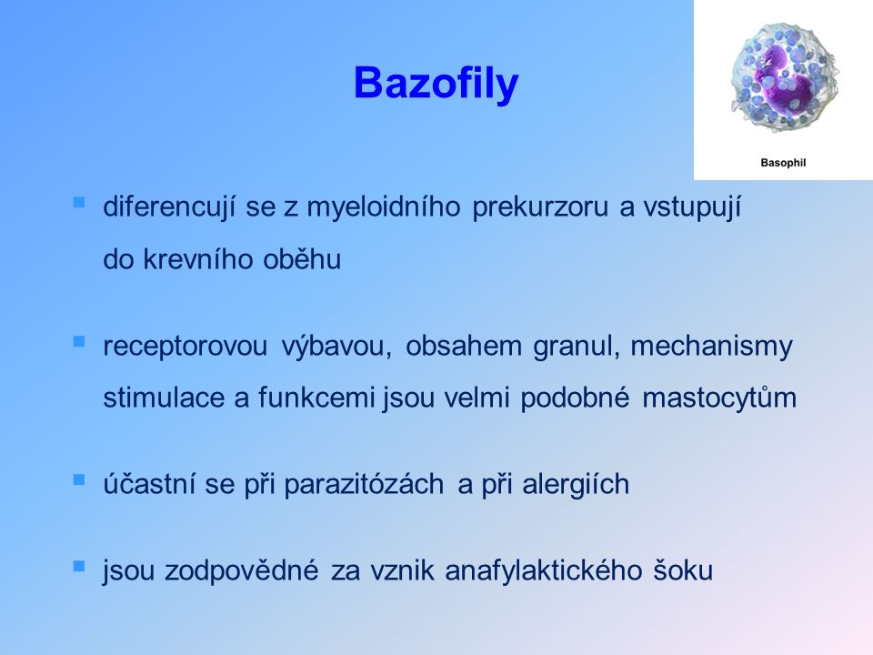 Bazofily  diferencují se z myeloidního prekurzoru a vstupují do krevního oběhu  receptorovou výbavou, obsahem granul, mechanismy stimulace a funkcemi jsou velmi podobné mastocytům  účastní se při parazitózách a při alergiích  jsou zodpovědné za vznik anafylaktického šoku