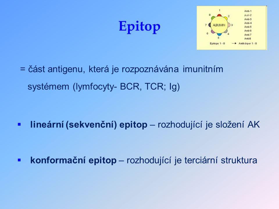 Epitop = část antigenu, která je rozpoznávána imunitním systémem (lymfocyty- BCR, TCR; Ig)  lineární (sekvenční) epitop – rozhodující je složení AK  konformační epitop – rozhodující je terciární struktura