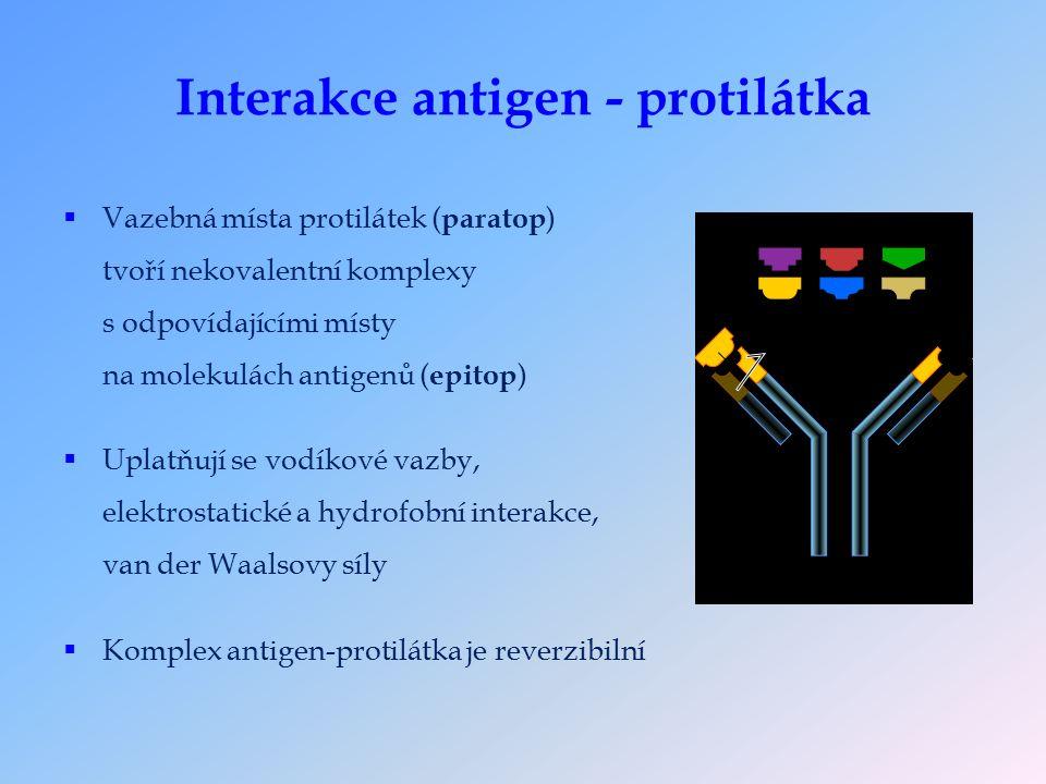 Interakce antigen - protilátka  Vazebná místa protilátek ( paratop ) tvoří nekovalentní komplexy s odpovídajícími místy na molekulách antigenů ( epitop )  Uplatňují se vodíkové vazby, elektrostatické a hydrofobní interakce, van der Waalsovy síly  Komplex antigen-protilátka je reverzibilní