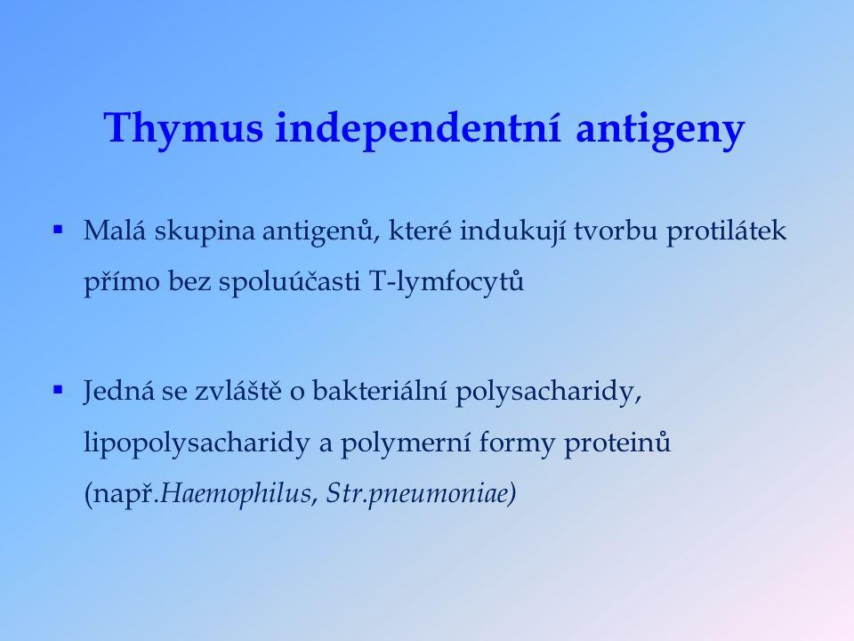 Thymus independentní antigeny  Malá skupina antigenů, které indukují tvorbu protilátek přímo bez spoluúčasti T-lymfocytů  Jedná se zvláště o bakteriální polysacharidy, lipopolysacharidy a polymerní formy proteinů (např.