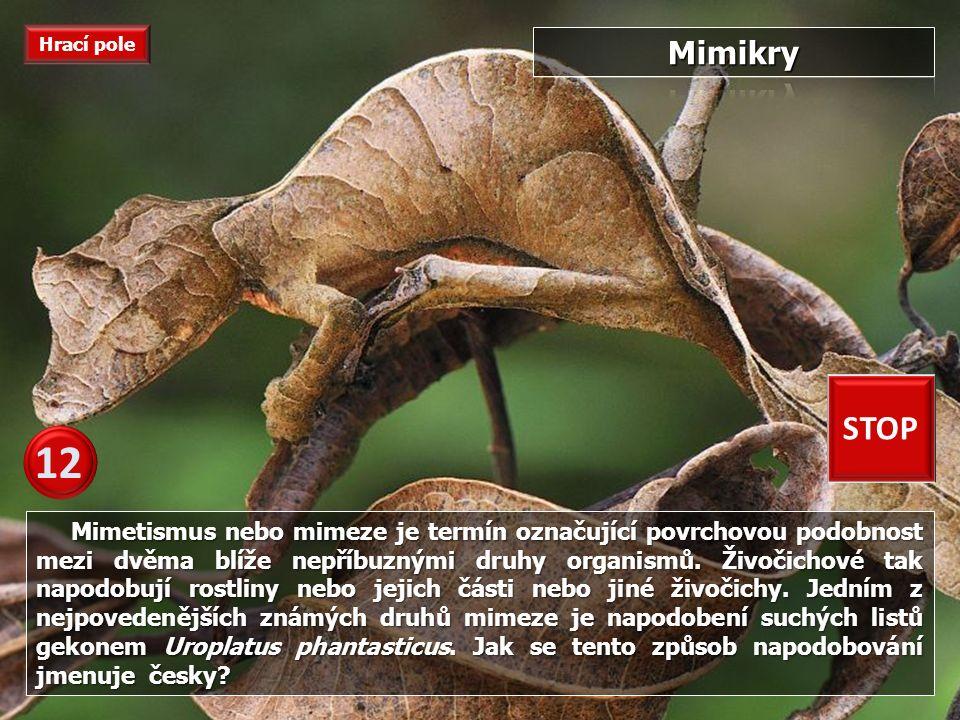 Rod těchto hadů patří do čeledi zmijovitých, žijící na americkém kontitentu.