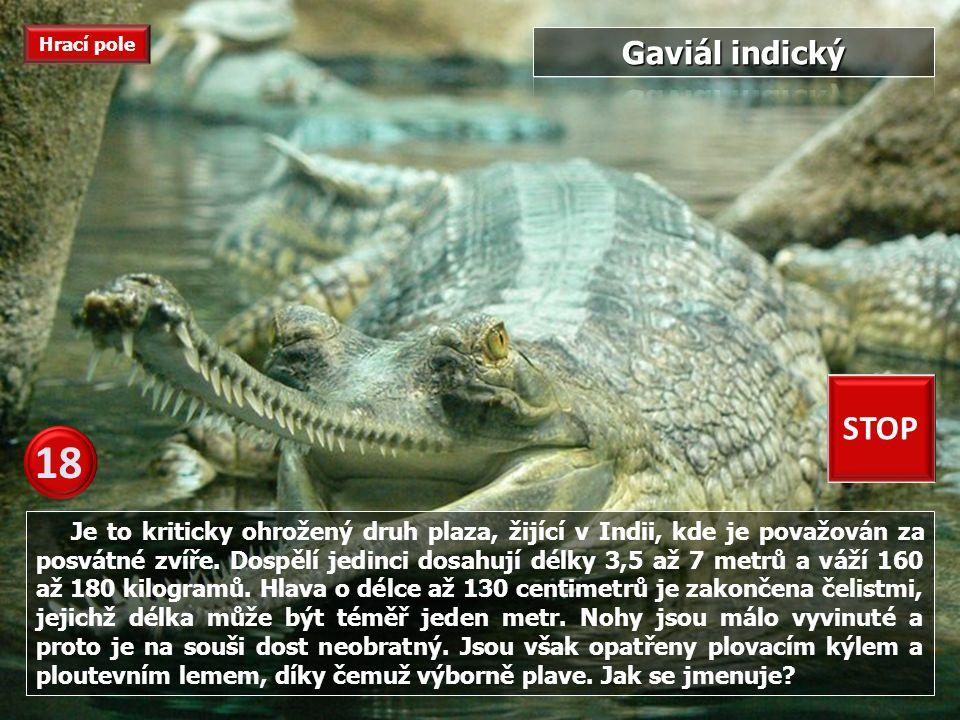 Tato želva Jak se jmenuje. Tato želva obývá víceméně všechna moře v tropickém a subtropickém pásu.