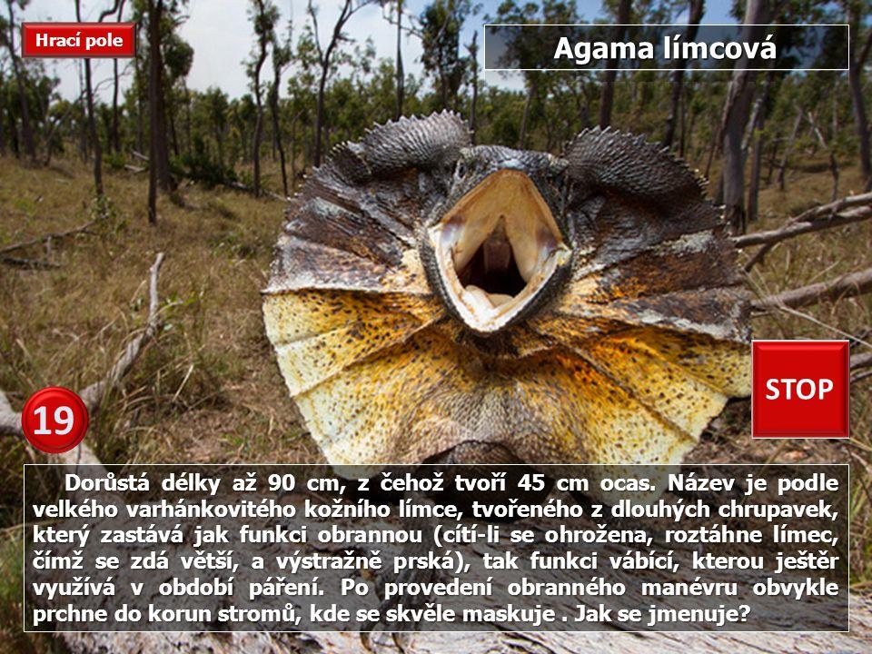 Je to kriticky ohrožený druh plaza, žijící v Indii, kde je považován za posvátné zvíře.