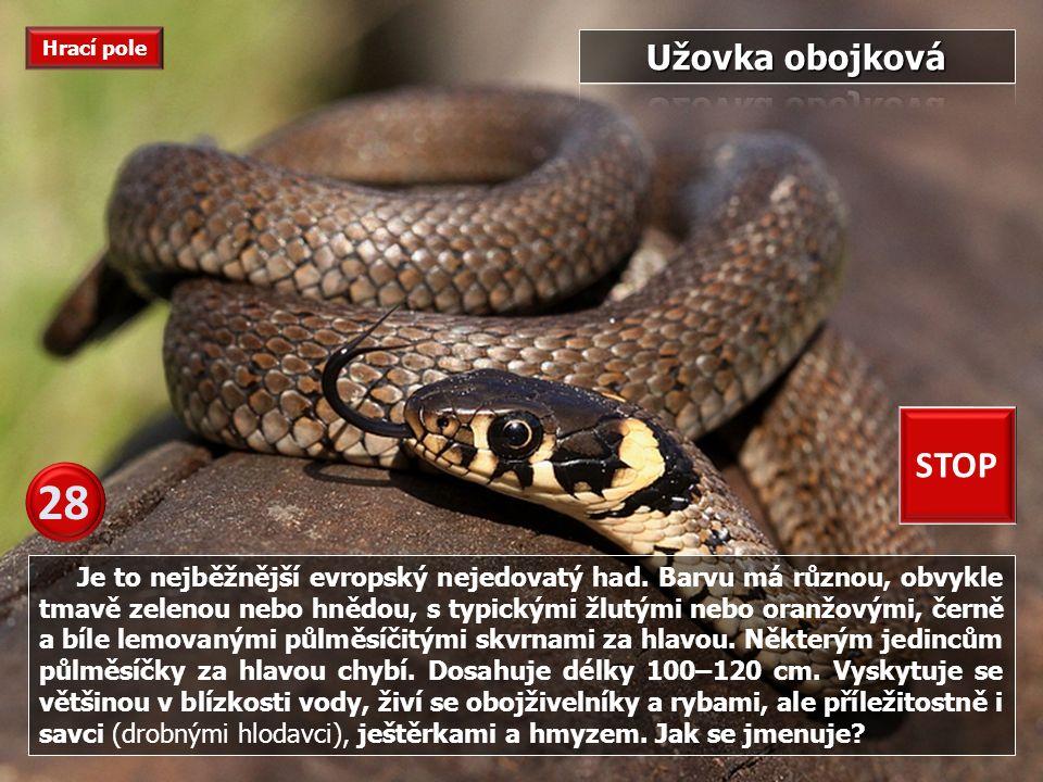 Toto je druh jedovatého hada, který žije v oblastech severní Afriky a Blízkého východu od Sahary po Syrskou poušť.