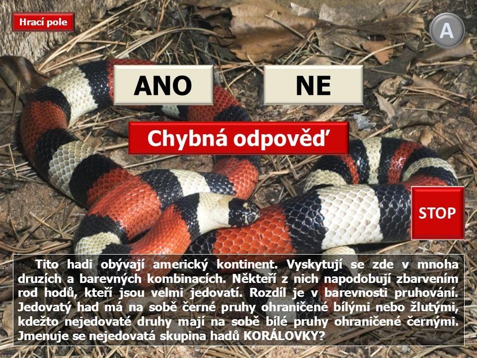 Je to nejběžnější evropský nejedovatý had.
