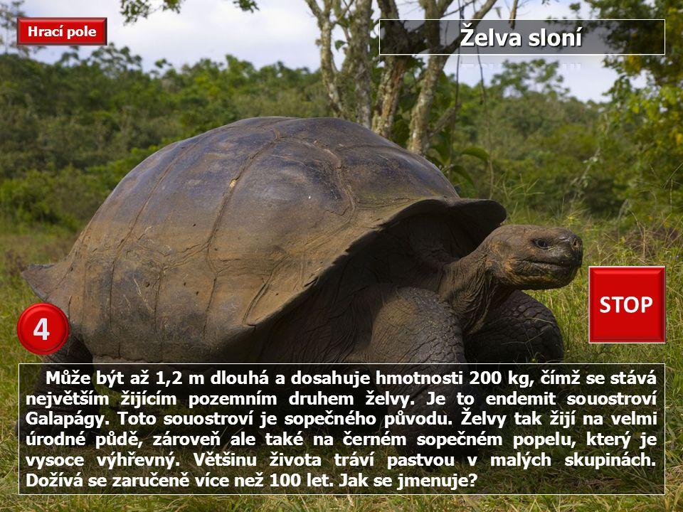 Je největším jedovatým hadem na území Afriky.