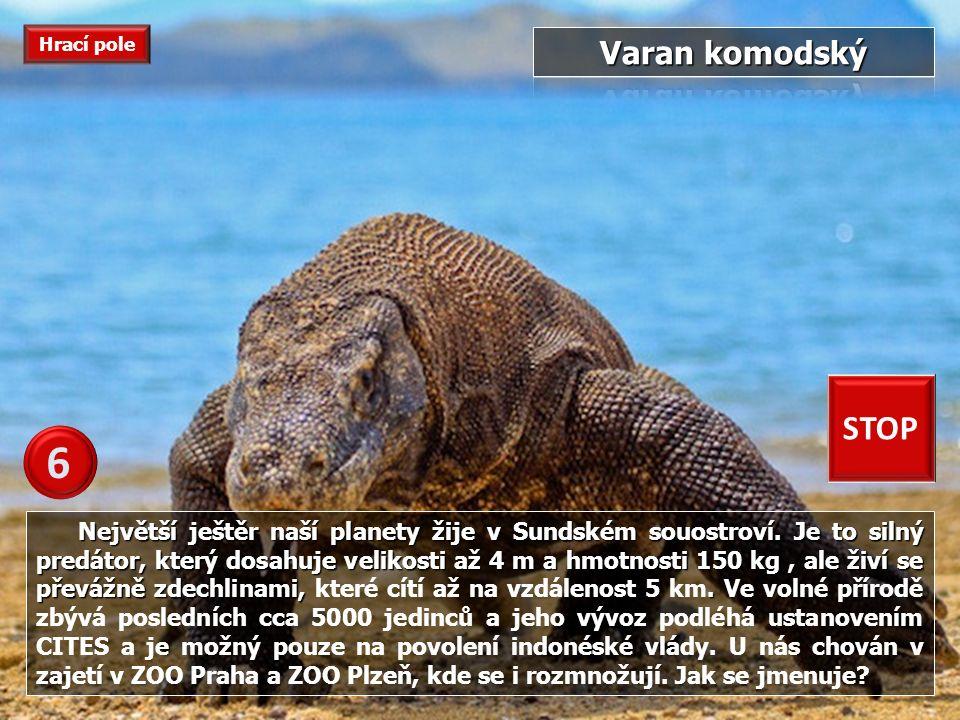 Největší ještěr naší planety žije v Sundském souostroví.