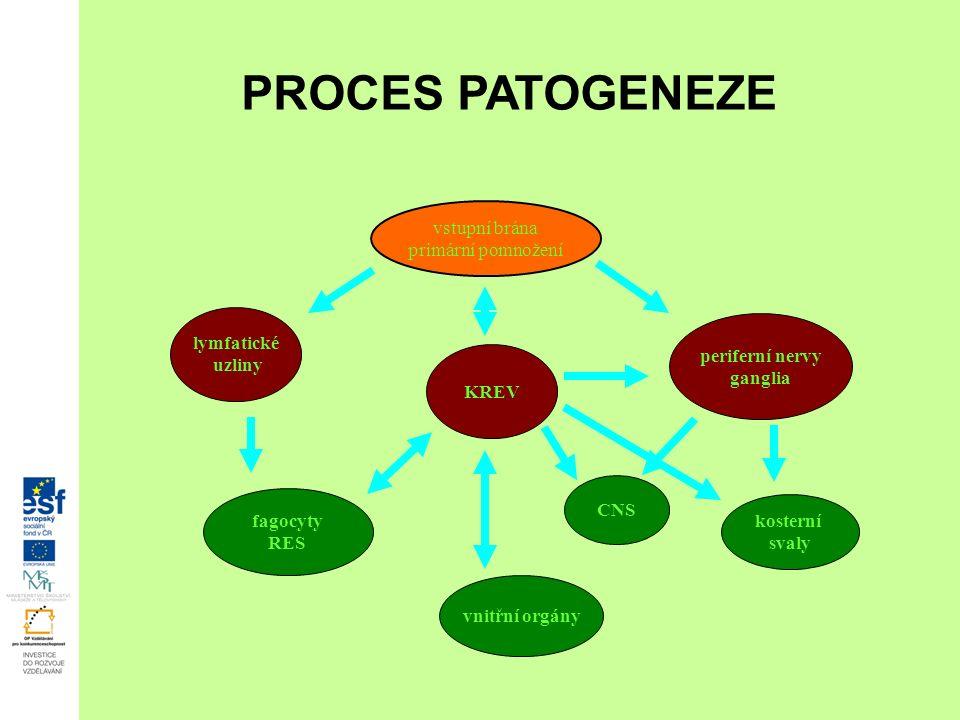 vstupní brána primární pomnožení lymfatické uzliny KREV periferní nervy ganglia CNS kosterní svaly vnitřní orgány fagocyty RES PROCES PATOGENEZE
