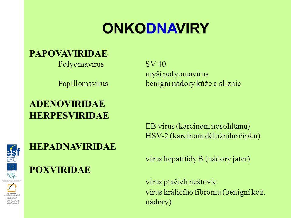 PAPOVAVIRIDAE PolyomavirusSV 40 myší polyomavirus Papillomavirusbenigní nádory kůže a sliznic ADENOVIRIDAE HERPESVIRIDAE EB virus (karcinom nosohltanu) HSV-2 (karcinom děložního čípku) HEPADNAVIRIDAE virus hepatitidy B (nádory jater) POXVIRIDAE virus ptačích neštovic virus králičího fibromu (benigní kož.