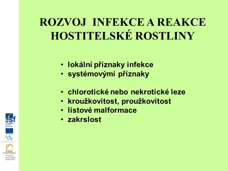 ROZVOJ INFEKCE A REAKCE HOSTITELSKÉ ROSTLINY lokální příznaky infekce systémovými příznaky chlorotické nebo nekrotické leze kroužkovitost, proužkovitost listové malformace zakrslost