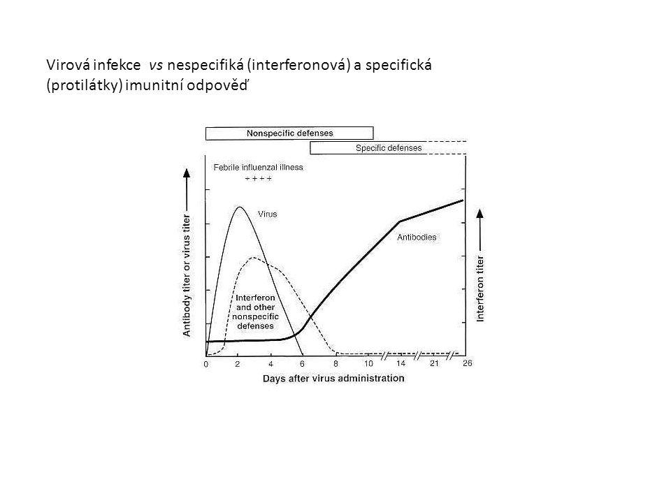 Virová infekce vs nespecifiká (interferonová) a specifická (protilátky) imunitní odpověď