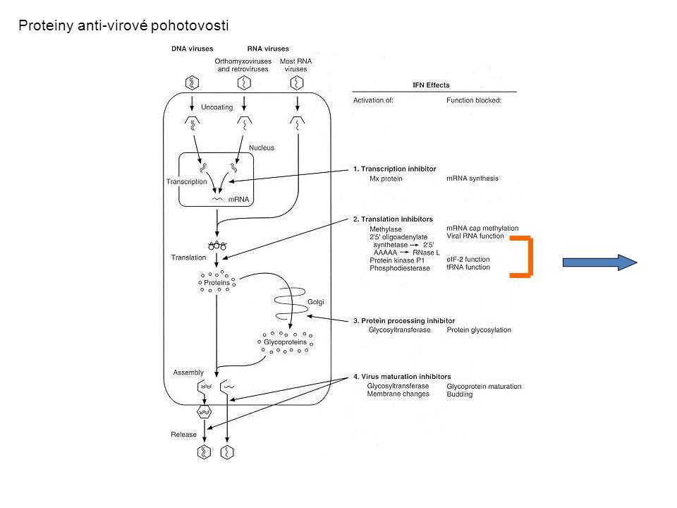 Proteiny anti-virové pohotovosti