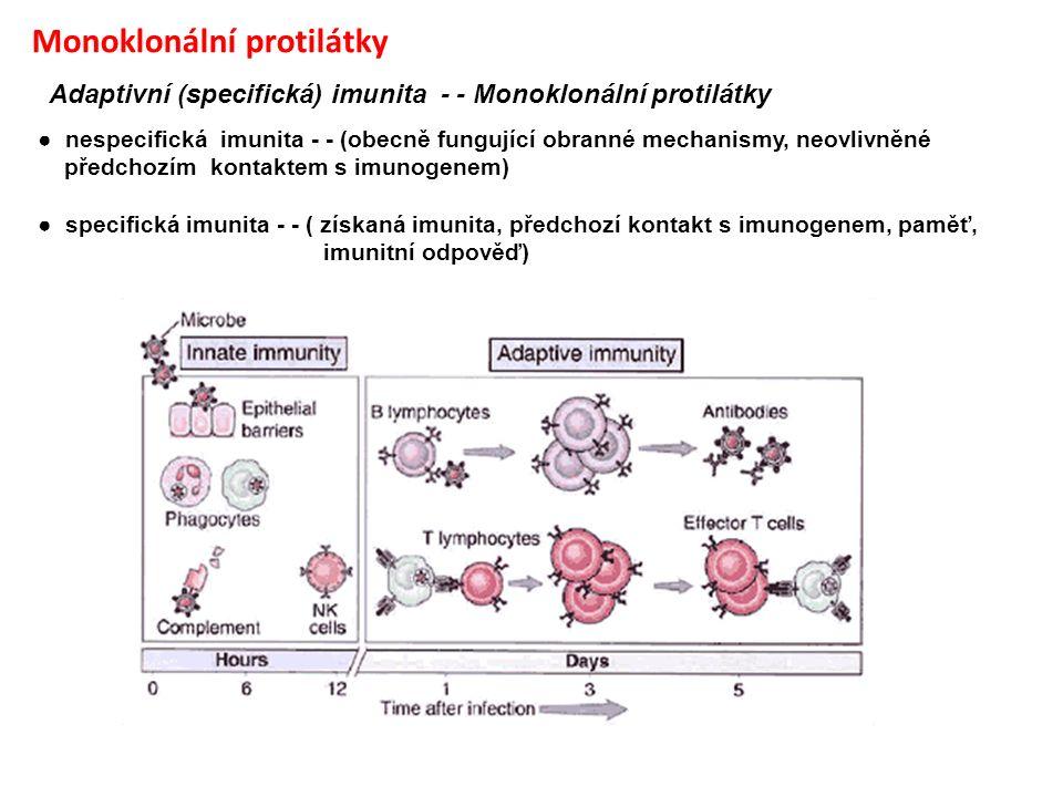 Monoklonální protilátky Adaptivní (specifická) imunita - - Monoklonální protilátky ● nespecifická imunita - - (obecně fungující obranné mechanismy, ne