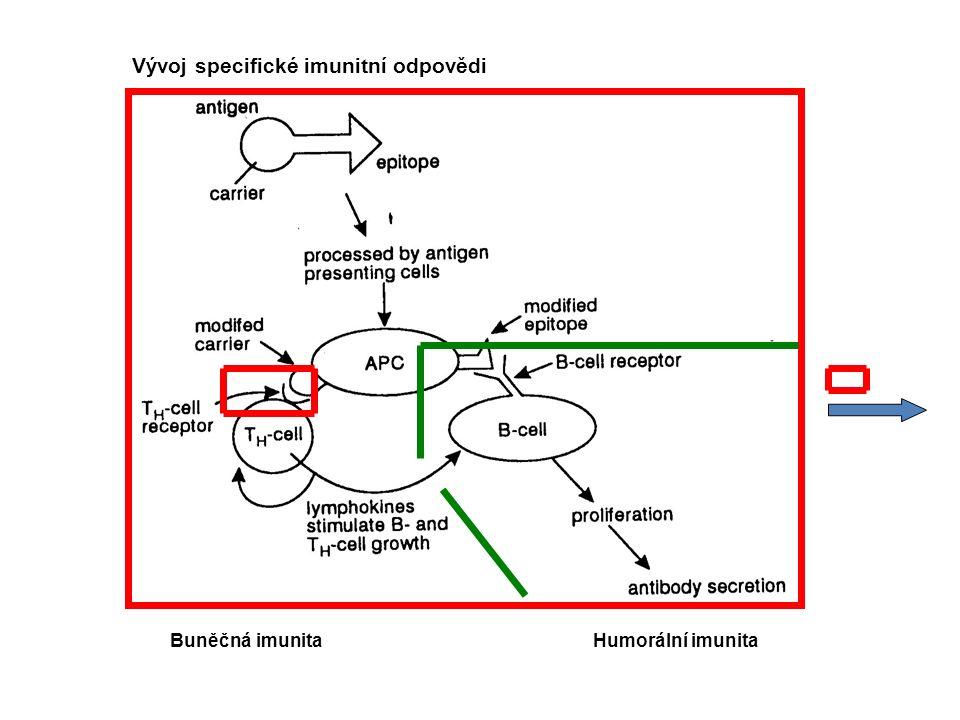 Vývoj specifické imunitní odpovědi Humorální imunitaBuněčná imunita