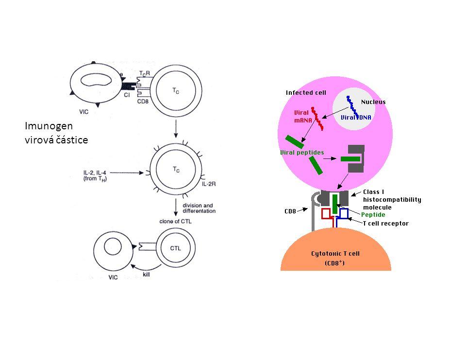 Imunogen virová částice