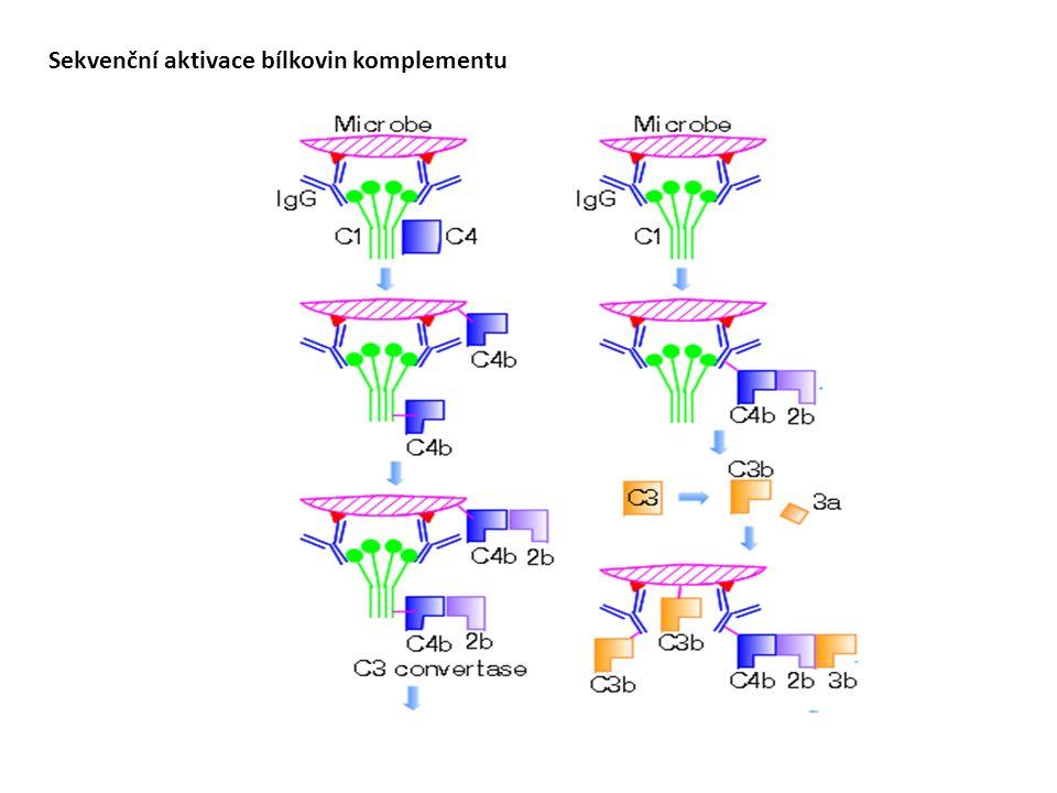 Sekvenční aktivace bílkovin komplementu