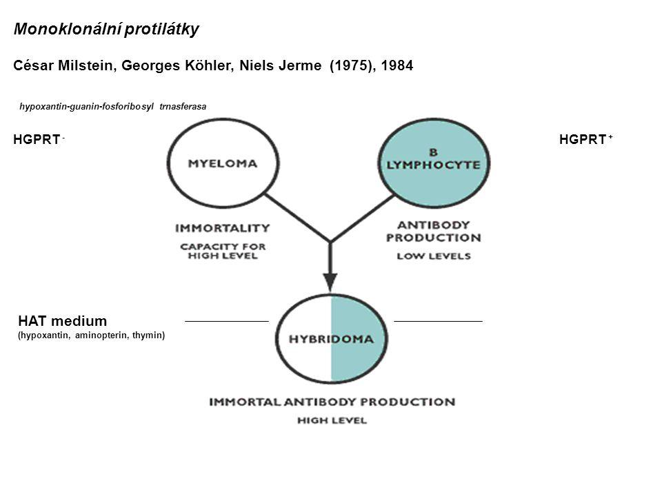 Monoklonální protilátky César Milstein, Georges Köhler, Niels Jerme (1975), 1984 HGPRT - HGPRT + hypoxantin-guanin-fosforibosyl trnasferasa HAT medium