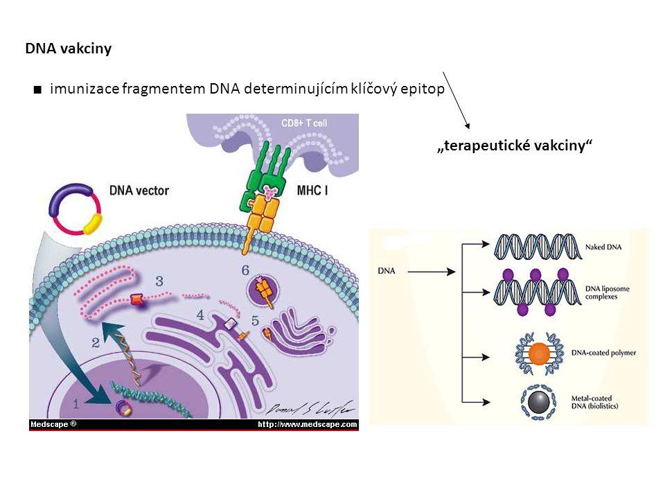 """DNA vakciny ■ imunizace fragmentem DNA determinujícím klíčový epitop """"terapeutické vakciny"""""""