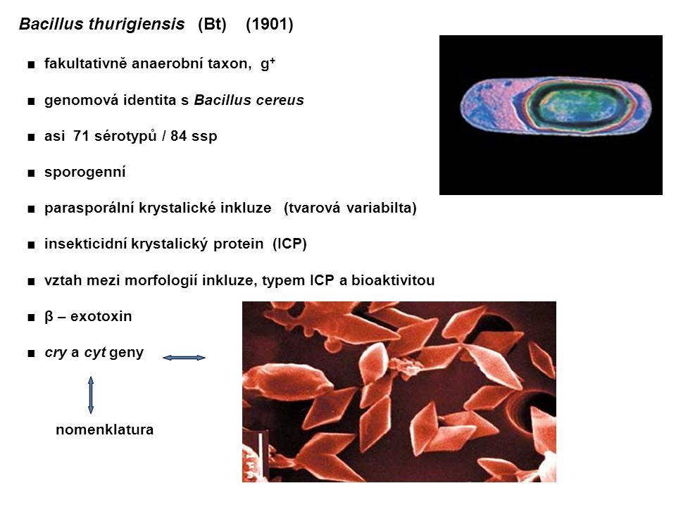 Bacillus thurigiensis (Bt) (1901) ■ fakultativně anaerobní taxon, g + ■ genomová identita s Bacillus cereus ■ asi 71 sérotypů / 84 ssp ■ sporogenní ■ parasporální krystalické inkluze (tvarová variabilta) ■ insekticidní krystalický protein (ICP) ■ vztah mezi morfologií inkluze, typem ICP a bioaktivitou ■ β – exotoxin ■ cry a cyt geny nomenklatura