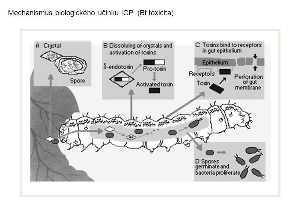 Mechanismus biologického účinku ICP (Bt toxicita)
