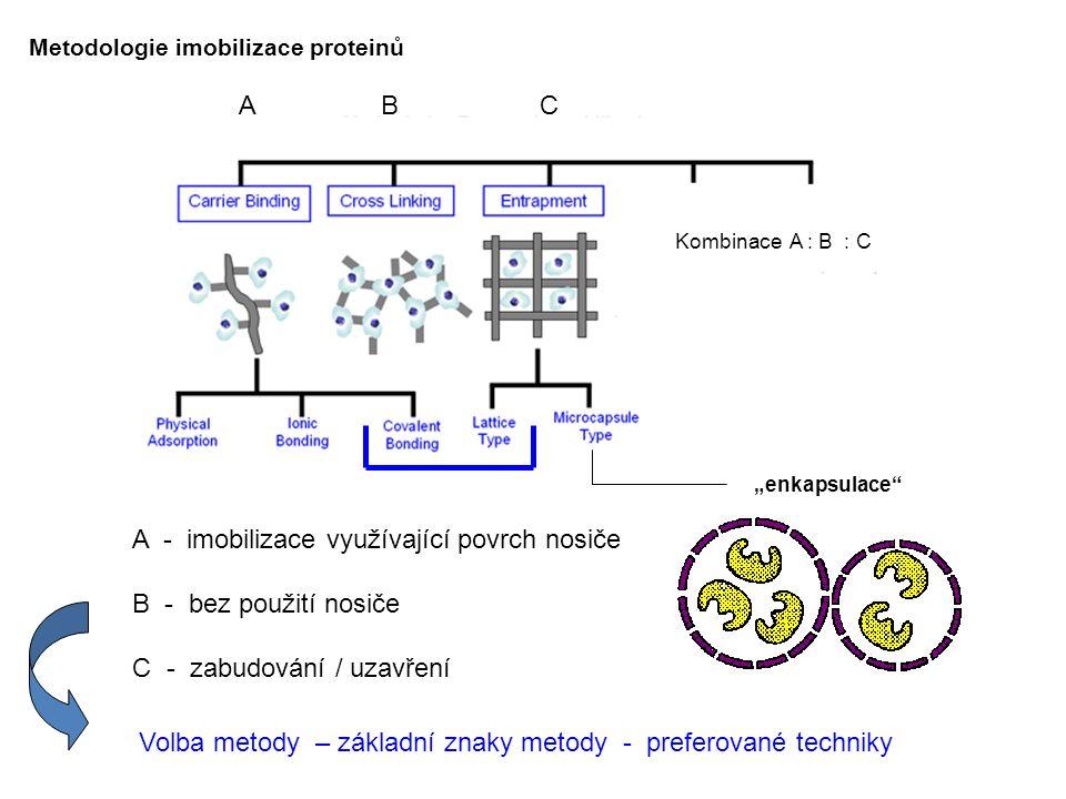 """Metodologie imobilizace proteinů A B C Kombinace A : B : C """"enkapsulace"""" A - imobilizace využívající povrch nosiče B - bez použití nosiče C - zabudová"""