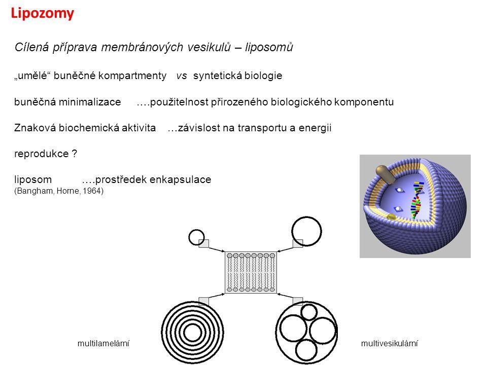 """Lipozomy Cílená příprava membránových vesikulů – liposomů """"umělé"""" buněčné kompartmenty vs syntetická biologie buněčná minimalizace ….použitelnost přir"""