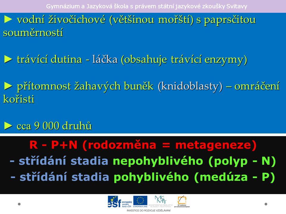 Gymnázium a Jazyková škola s právem státní jazykové zkoušky Svitavy larva polyp strobilace strobilace.