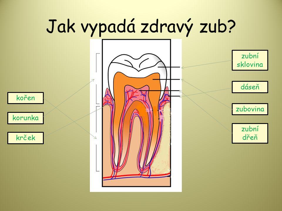 Jak vypadá zdravý zub korunka krček kořen dáseň zubní sklovina zubovina zubní dřeň