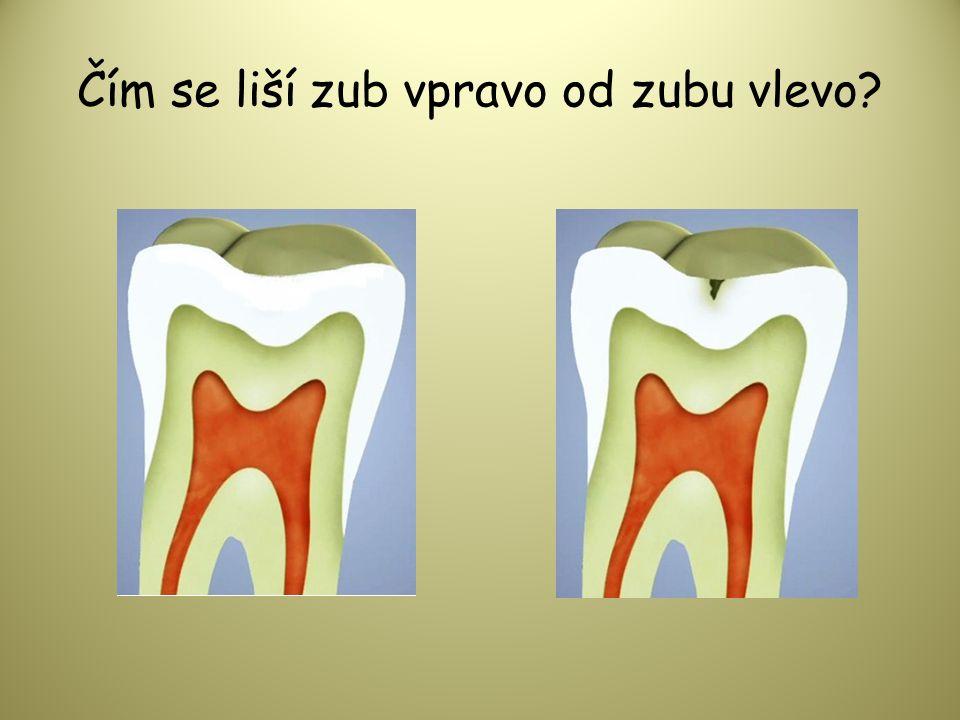 Čím se liší zub vpravo od zubu vlevo