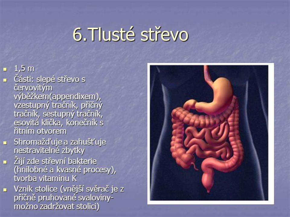 6.Tlusté střevo 1,5 m 1,5 m Části: slepé střevo s červovitým výběžkem(appendixem), vzestupný tračník, příčný tračník, sestupný tračník, esovitá klička, konečník s řitním otvorem Části: slepé střevo s červovitým výběžkem(appendixem), vzestupný tračník, příčný tračník, sestupný tračník, esovitá klička, konečník s řitním otvorem Shromažďuje a zahušťuje nestravitelné zbytky Shromažďuje a zahušťuje nestravitelné zbytky Žijí zde střevní bakterie (hnilobné a kvasné procesy), tvorba vitaminu K Žijí zde střevní bakterie (hnilobné a kvasné procesy), tvorba vitaminu K Vznik stolice (vnější svěrač je z příčně pruhované svaloviny- možno zadržovat stolici) Vznik stolice (vnější svěrač je z příčně pruhované svaloviny- možno zadržovat stolici)