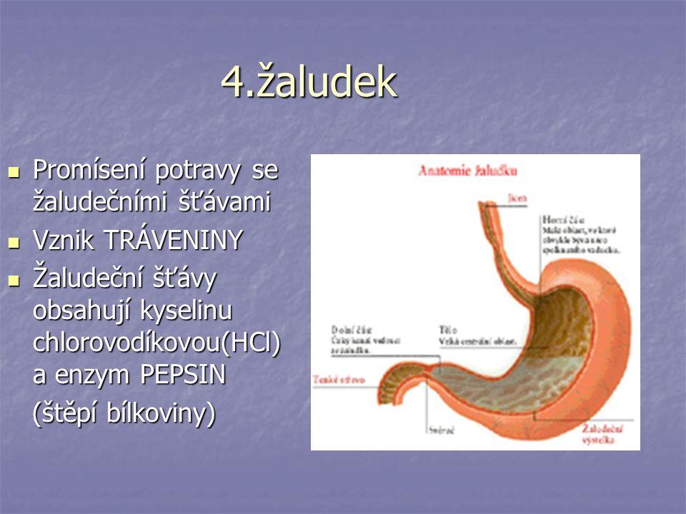 5.Tenké střevo 3-5 m 3-5 m Má 3 oddíly: dvanáctník, lačník, kyčelník Má 3 oddíly: dvanáctník, lačník, kyčelník probíhá zde hlavní část trávení a vstřebávání živin probíhá zde hlavní část trávení a vstřebávání živin Povrch je pokryt výběžky=KLKY(přes ně se vstřebávají živiny do krve) Povrch je pokryt výběžky=KLKY(přes ně se vstřebávají živiny do krve) Do dvanáctníku ústí 2 žlázy: slinivka břišní a játra Do dvanáctníku ústí 2 žlázy: slinivka břišní a játra