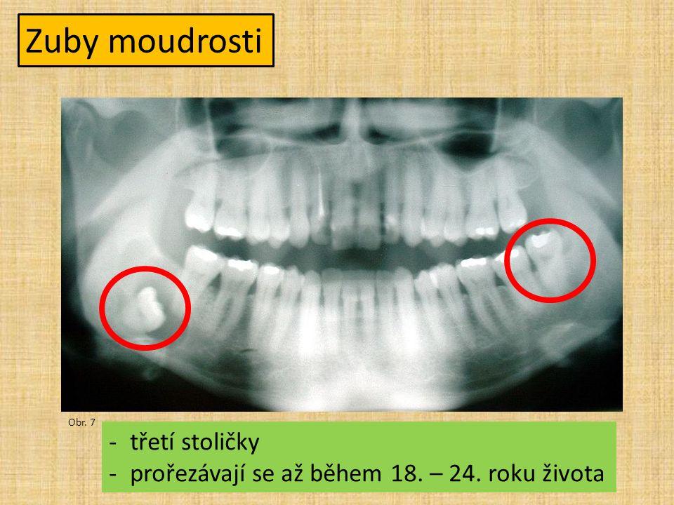 Zuby moudrosti Obr. 7 -třetí stoličky -prořezávají se až během 18. – 24. roku života
