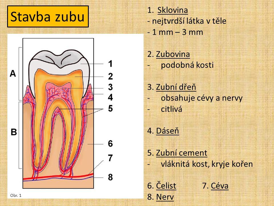Stavba zubu 1.Sklovina - nejtvrdší látka v těle - 1 mm – 3 mm 2.