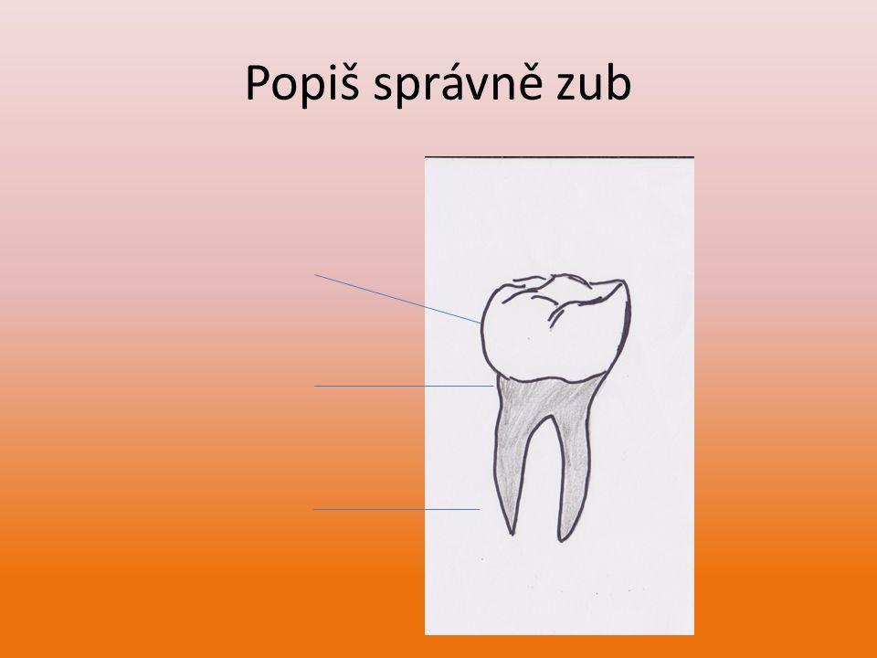 Popiš správně zub