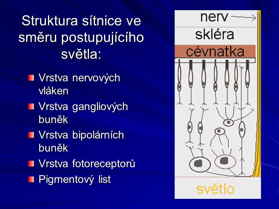 Struktura sítnice ve směru postupujícího světla: Vrstva nervových vláken Vrstva gangliových buněk Vrstva bipolárních buněk Vrstva fotoreceptorů Pigmentový list